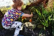 buliding the mini zoo